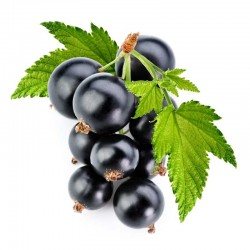 Blackcurrant flavour concentrate - Inawera