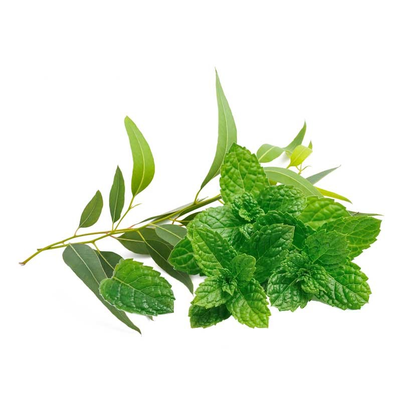 Mint and Eucalyptus flavour concentrate - Inawera