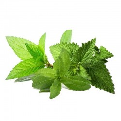Mix Mint flavour concentrate - Inawera