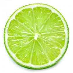 Lime flavour concentrate - Capella