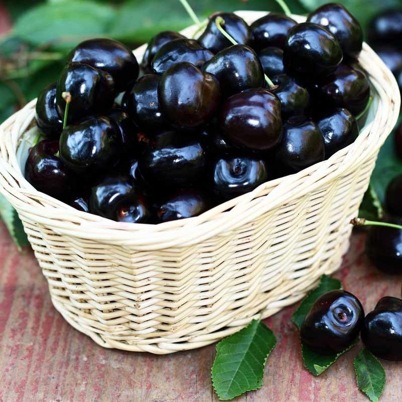 Black Cherry concentrate TFA - The Flavor Apprentice