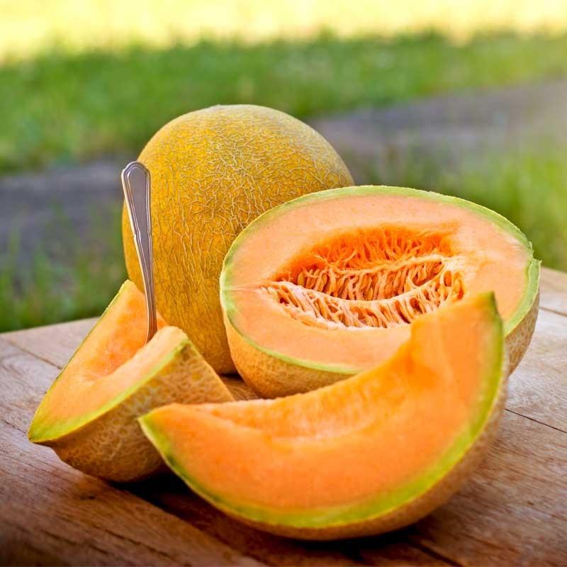 Cantaloupe concentrate TFA - The Flavor Apprentice