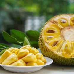 Jackfruit concentrate TFA - The Flavor Apprentice